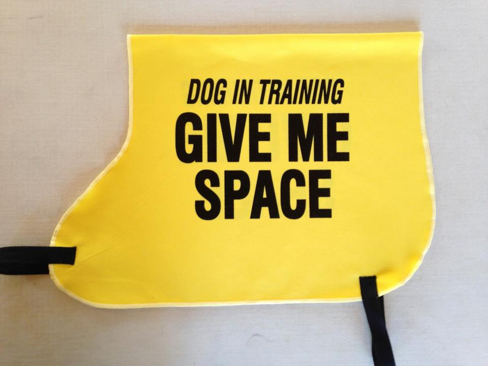 Dog Vest Patches Dog in Training Vest Cricket