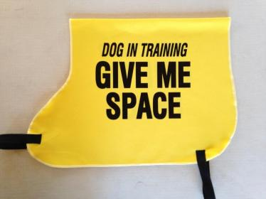 dog in training vest cricket mara