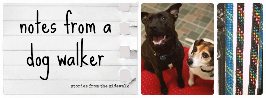 notes from a dog walker blog